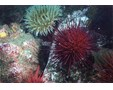 Photo of sea urchin