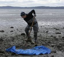 Scientist collecting shellfish samples